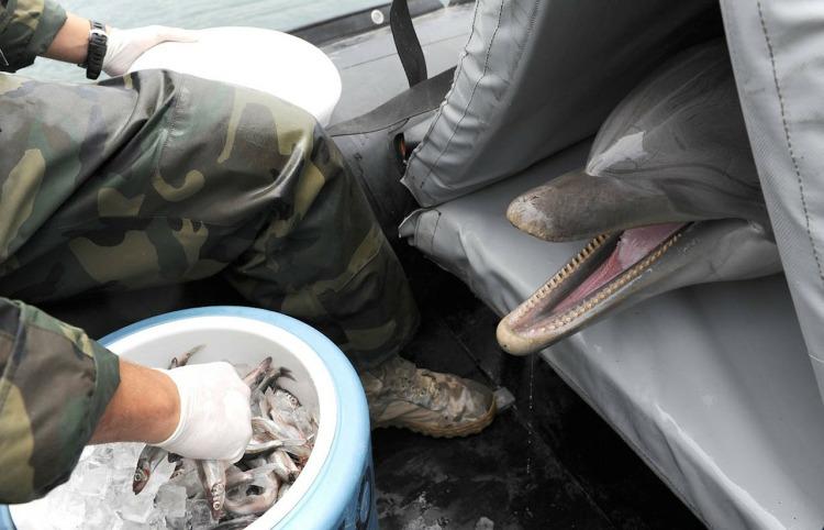 dolphin rescue-79581_1280